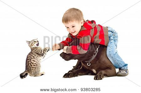 Boy, dog and kitten cheerfully playing together
