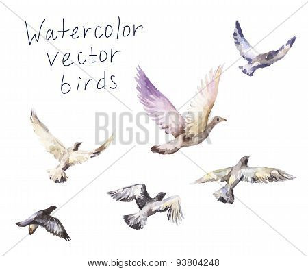 Flying birds watercolor painting.