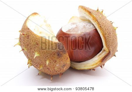Chestnut With Crust On A White Background