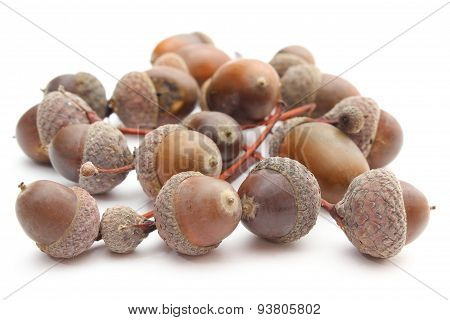 Brown Acorns On White Background