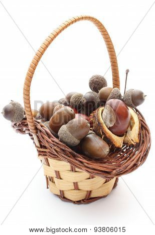 Brown Acorns And Chestnut In Wicker Basket On White Background