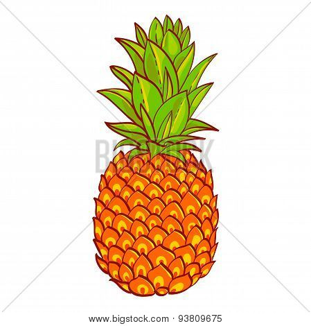 Pineapple. Hand drawn vector. Print on t-shirt