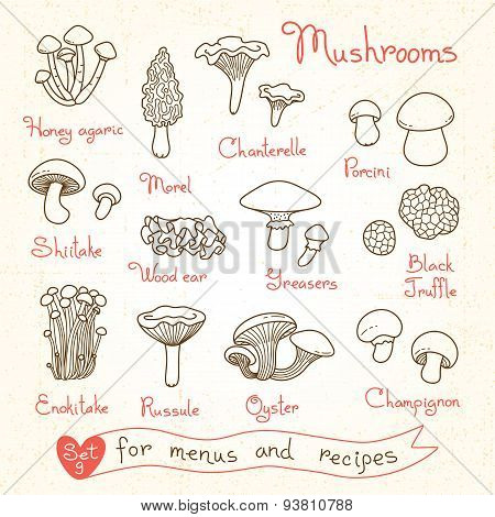 Set drawings of mushrooms for design menus, recipes and packages product.
