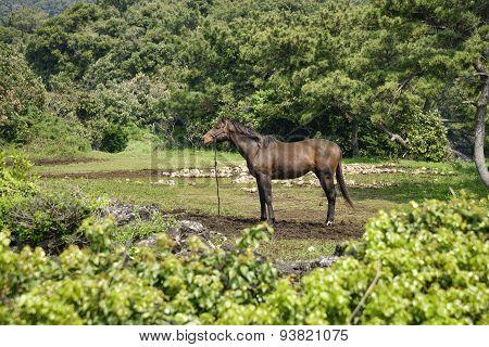 Muscular Horse In A Grassland