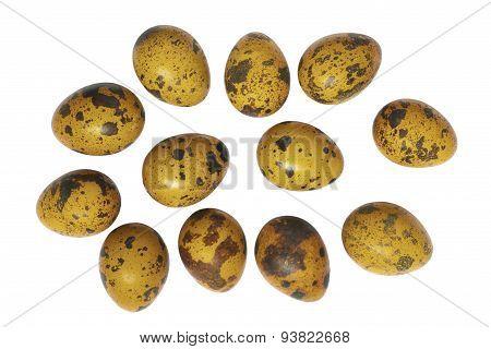 Quail Eggs.