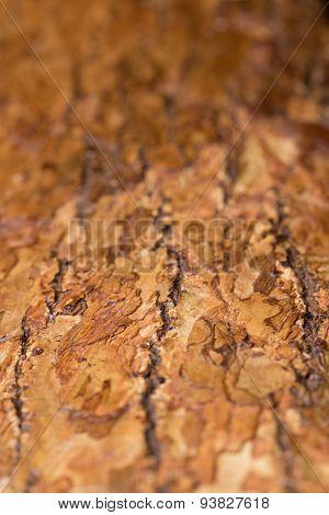 Macro Wood Bark Texture