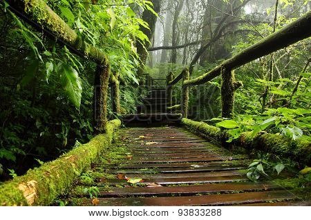 Wood Path Through The Nature Of Tropical Forest, Chiang Mai, Thailand