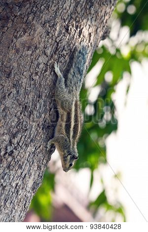 Chipmunk on the tree