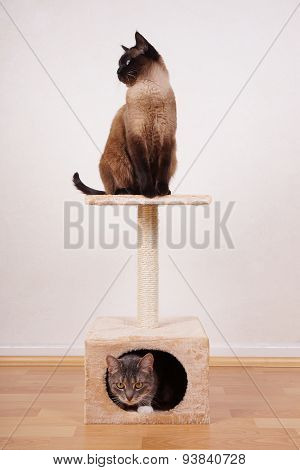 two cats on cat tree