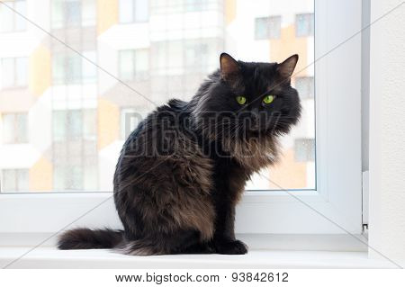 Cat On The Window In A New Apartment House