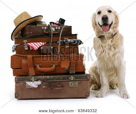 Cute Labrador with suitcases isolated on white