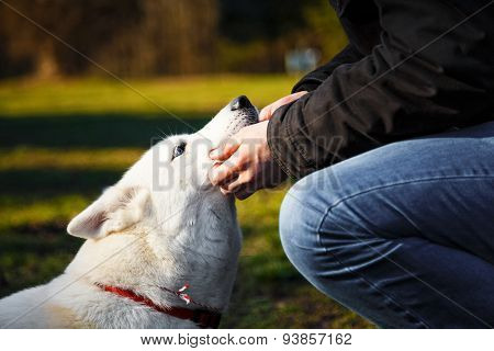 Young Man And His Siberian Husky