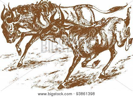 Running antelopes