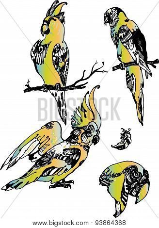 Yellow parrots