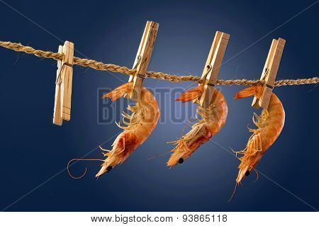 Shrimp On A Rope.