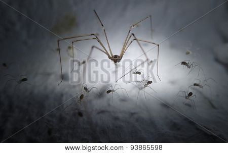 Cell spider guarding its littles