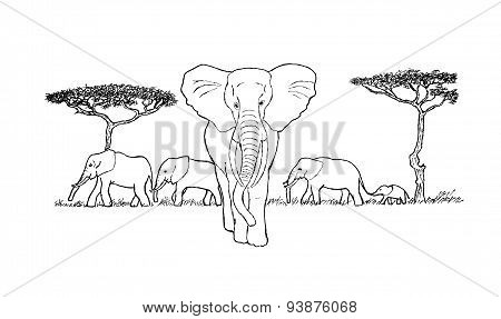 herd of elephants sketch