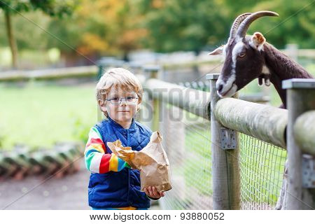 Kid Boy With Glasses Feeding Goats On An Animal Farm