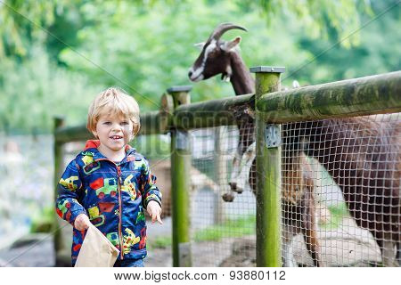 Kid Boy Feeding Goats On An Animal Farm