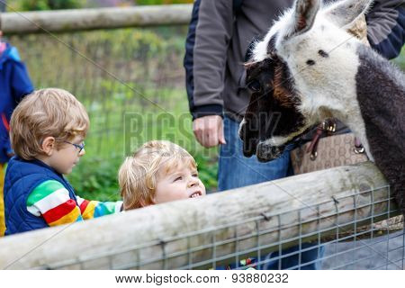 Two Little Kid Boys Feeding Big Lama On An Animal Farm