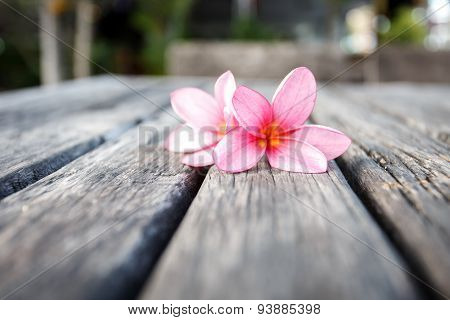 Pink Flower On Old Wooden Plank
