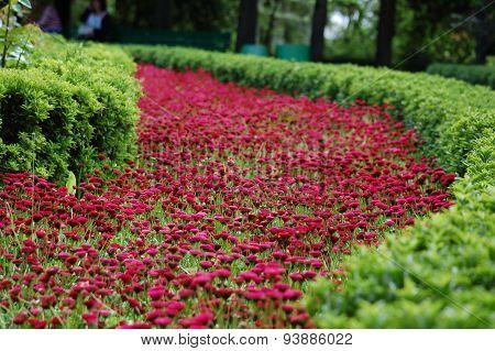 Crimson flowers path