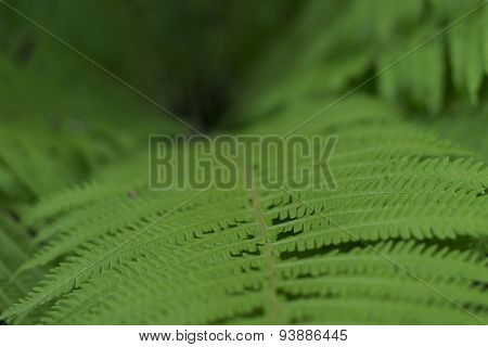 Fern leaf seen from a snail view