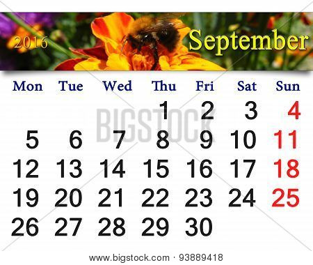 Calendar For September 2016 With Tagetes