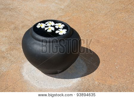 Frangipani flowers floating in water urn