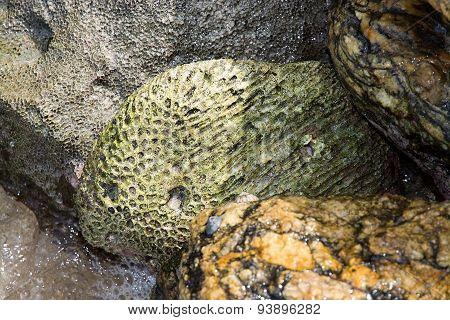 Green fossil among seashells