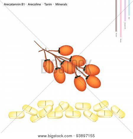Areca Nut With Arecatannin B1, Arecoline And Tanin