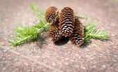 stock photo of pine cone  - Fresh pine cones resting on stone with branches - JPG