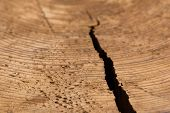 stock photo of crevasse  - A close up shot of the texture and grain in a cut stump of a tree with a crack splitting it open from the side - JPG