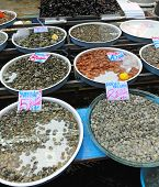 stock photo of clam  - Shellfish and Clams Seafood at Fish Market in Italy - JPG