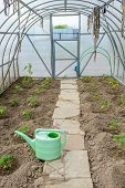 pic of early spring  - the arch of the greenhouse tomato seedlings in early spring - JPG