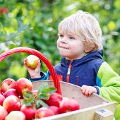 stock photo of trolley  - Cute funny toddler boy pushing wooden trolley with red apples and eating fruits - JPG
