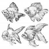 foto of goldfish  - set of Goldfish - JPG