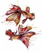 picture of goldfish  - Goldfish vector watercolor illustration - JPG