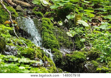 Small Fast Stream In Forest