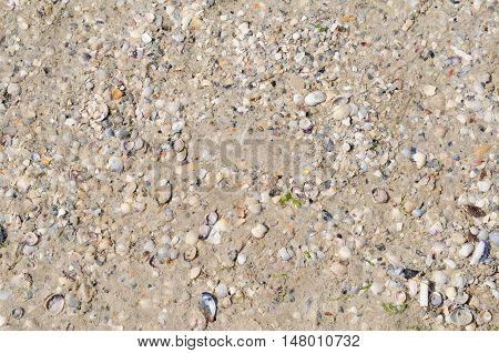 Background of sea sand beach and tiny sea shells