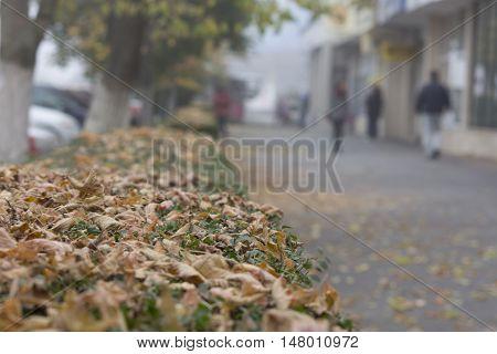 Sidewalk during fall in an urban setting