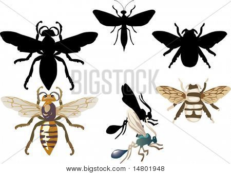 illustration with insect isolated on white background
