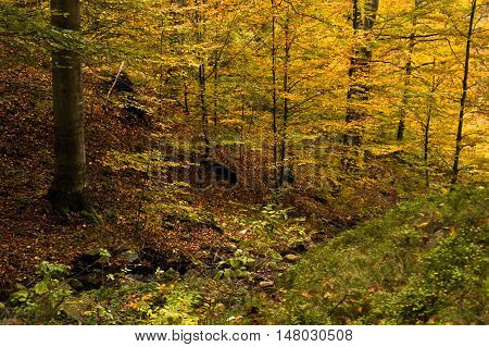 Autumn colors of a forest at Goc mountain, Serbia