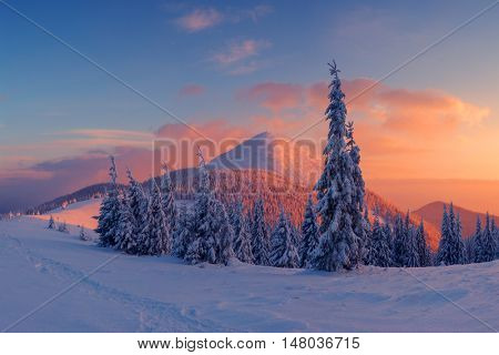 Fantastic orange evening landscape glowing by sunlight. Dramatic wintry scene with snowy trees. Carpathians, Ukraine, Europe. Merry Christmas!