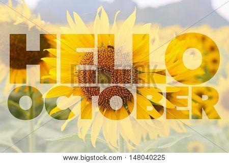 Hello October word on sun flower background