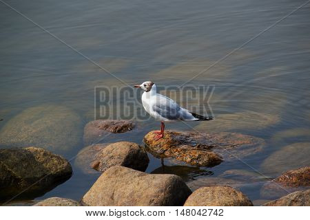 beach sea life bird life amazing air gray wing holiday beach white relax travel su