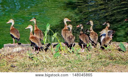 Brown Birds On The Pond