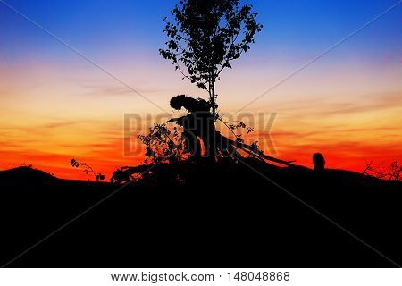 beautiful scenery of setting sun with dark silhouettes of man and child sitting on tree branches