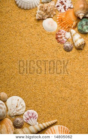 A seashell background with copy space.