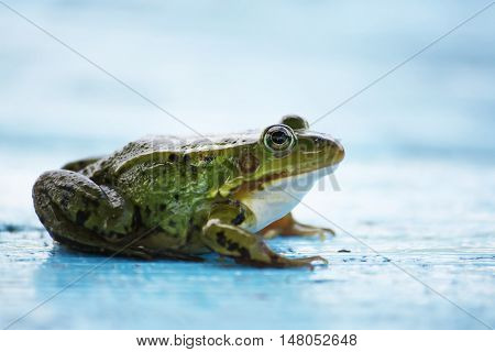 Green frog sitting on a blue wooden aged board